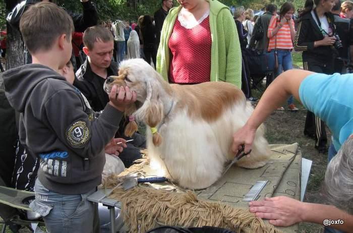 Выставка собак День города, Луганск.