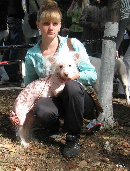 Выставка собак на День города, Луганск. 8 сентября 2012 г.