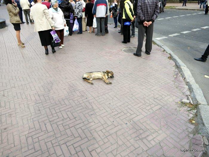 Собаченька устала ждать президента. 16 октября 2012 г.