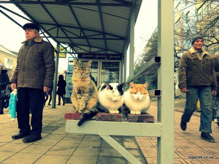 3 котэ на остановке, пос. Юбилейный, Луганск.