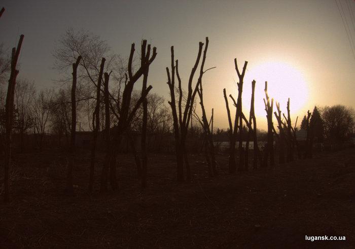 Пеньки за Эпицентром в Луганске.