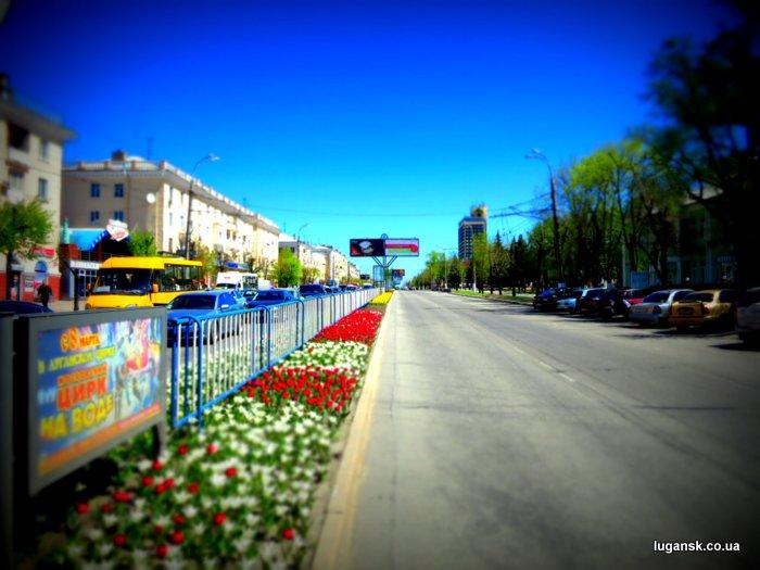 Тюльпаны из Голландии на ул. Советская по разделительной полосе в Луганске.