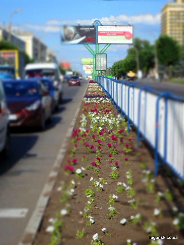 Петунии в Луганске на ул. Советская.