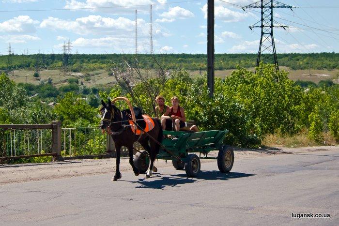 Фотография лошади запряженной в телегу в Луганске, как символ общественного транспорта города.